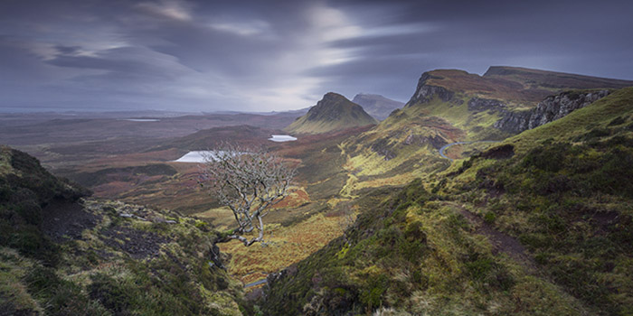 The Quiraing and the old tree